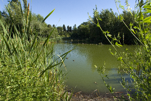Sanctuary Pond